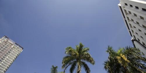 Palmbomen (groot)